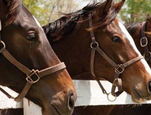 Annual Equine Health – Complimentary Webinars